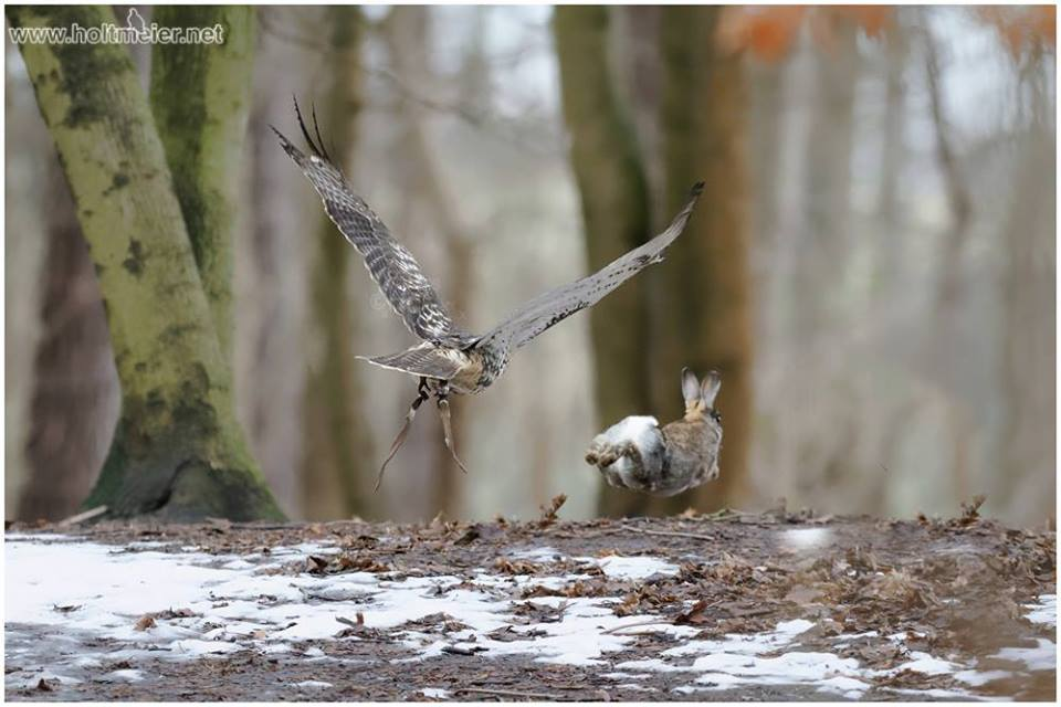 Hunting / Falconry
